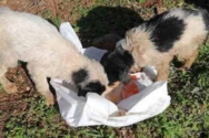 Δυτική Ελλάδα: Έδεσαν σκυλάκια σε τσουβάλι και τα πέταξαν