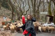 Η Δέσποινα Βανδή κυνηγάει ένα κοπάδι με πρόβατα στο Πλανητέρο Καλαβρύτων (video)