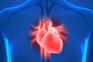Καρδιά - Τι να προσέξουμε για να την προφυλάξουμε