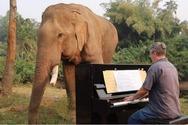 Ο Paul Barton παίζει πιάνο σε ελέφαντες που σώθηκαν από την αιχμαλωσία (video)
