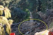 Πάτρα: Σε κακή κατάσταση παραμένει ένα από τα ομορφότερα μονοπάτια του Δασυλλίου (φωτο)