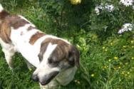 Πάτρα: Χάθηκε σκυλάκι στην περιοχή των Ζαρουχλεΐκων (φωτο)
