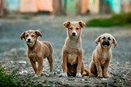 Οι 10 άξονες του νομοσχεδίου για τα ζώα συντροφιάς