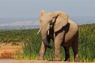 Ελέφαντας σκότωσε εργαζόμενο σε ζωολογικό κήπο στην Ισπανία