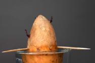 Tι θα συμβεί αν πάρεις μια γλυκοπατάτα και την βάλεις στο νερό (video)