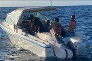 Σίδνεϊ: Ψαράδες έπιασαν στα δίχτυα τους έναν καρχαρία 394,5 κιλών (φωτο)