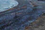 Πάτρα: Εργαζόμενοι του Δήμου καθαρίζουν την παραλία του Ρίου