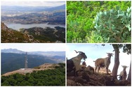 Αχαΐα - Ανεβαίνοντας στο Κομποβούνι με θέα την λίμνη Αστερίου (video)