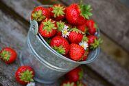 Εξαγωγές: «Αντέχουν» τα εσπεριδοειδή - «Πετάει» η φράουλα