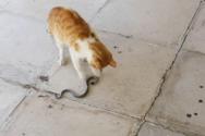 Ναύπακτος: Γάτα