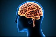 Εγκέφαλος - Οι «αθώες» συνήθειες που τον βλάπτουν