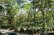 Ο Αμαζόνιος εξέπεμψε περισσότερο διοξείδιο του άνθρακα από όσο απορρόφησε