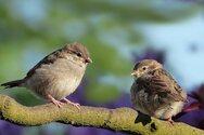 Υπάρχουν περίπου 50 δισεκατομμύρια πτηνά στη Γη - Ποιο είδος είναι το πολυπληθέστερο;