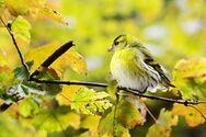 Συνεχίζεται η μείωση των πουλιών στα χωράφια