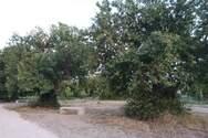 σπιράλ: «Τι οικολογική συνείδηση διαμορφώνει ο Δήμος Πατρέων;»
