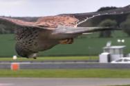 Βίντεο δείχνει γεράκι να αιωρείται με το κεφάλι του να μένει εντελώς ακίνητο