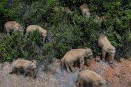 «Σαρώνουν» τα πάντα οι ασιατικοί ελέφαντες που έγιναν viral για τον ύπνο τους
