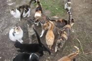 Πάτρα: Καταγγελίες από φιλόζωους - Σκηνίτες κακοποιούν τα γατάκια στο Πάρκο