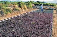 Η Νομαρχιακή Επιτροπή ΚΙΝΑΛ Αχαΐας για τους σταφιδοπαραγωγούς της Αιγιάλειας