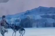Λύκοι κυνηγούν ηθοποιούς και τρέχουν ανάμεσα σε θεατές σε live παράσταση στην Κίνα