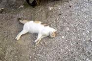 Πάτρα: Νεκρά γατάκια από φόλα στις σκάλες της Πατρέως