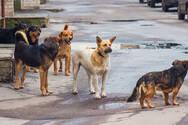 Πάτρα: Στον εισαγγελέα κάτοικοι του Ρίου για τις επιθέσεις σκύλων