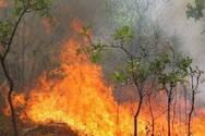 Μεγάλη φωτιά στην Κάρυστο Ευβοίας - Ισχυροί άνεμοι στην περιοχή