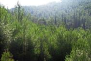 Νάουσα: Αίσιο τέλος στην περιπέτεια 19 εκδρομέων που χάθηκαν σε δασική περιοχή