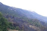 Μέτωπο στη Δροσιά - Η φωτιά έσβησε, ο Ερύμανθος