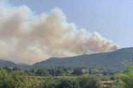 Αιτωλοακαρνανία: Δασική πυρκαγιά στο Θύρι