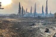 Φωτιά στην Αιγιάλεια: Καλύτερη η εικόνα - Έρευνες για τα αίτια της φωτιά