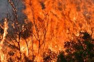 Ανεξέλεγκτα τα πύρινα μέτωπα στην Εύβοια: Εκκενώνονται οικισμοί