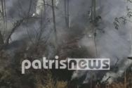 Ηλεία: Εικόνες από το γκρίζο τοπίο που άφησε πίσω της η φωτιά στον Πλάτανο (video)