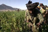 Αφγανιστάν: Οι Ταλιμπάν θα συνεχίσουν να «πλημμυρίζουν» με όπιο τη Δύση