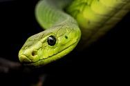 Πώς η εξαφάνιση των δεινοσαύρων άφησε το πεδίο ελεύθερο για τα φίδια