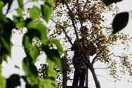 Πάτρα: Κλάδεμα δέντρων στην Οδό Μαιζώνος
