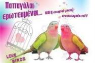 Group 59: LOVE BIRDS