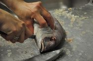 Ο πιο εντυπωσιακός τρόπος για να καθαρίζετε τα ψάρια σας γρήγορα (video)