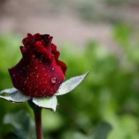 Flower Beauty Ανθοπωλείο