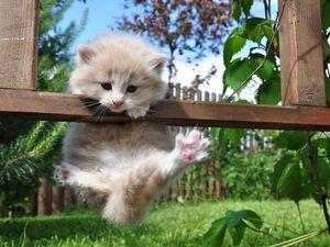 Αστείες φωτογραφίες - Γάτες… νίνζα που εμφανίζονται από το πουθενά