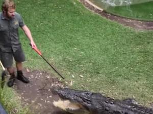 Αυστραλία - Πρόταση γάμου με καλεσμένο έναν… αλιγάτορα (video)