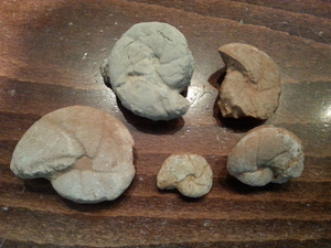 Απολιθώματα, μάρτυρες μιας άλλης εποχής..