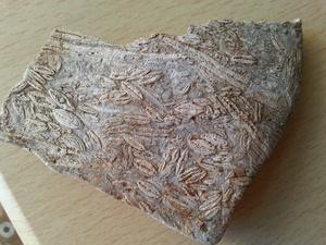 Ημερολόγιο χρονομηχανής 56 εκατομμύρια χρόνια Π.Χ. Γεωλογική περίοδος: Ηώκαινο, οργανισμός μελέτης: Νουμουλίτες