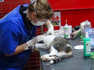 Πάτρα: Προωθείται η δημιουργία δημοτικού κτηνιατρείου για τα αδέσποτα ζώα!