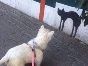 Σκυλίτσα δεν θέλει να βλέπει γάτες ούτε… ζωγραφιστές (video)