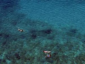 WWF: Η Μεσόγειος σε καθεστώς υψηλού κινδύνου