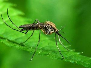 Δράσεις πρόληψης για τα κουνούπια στην Πάτρα!