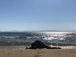 Τάνια Αλεξανδρή - Το κορίτσι που έγινε ένα με την άμμο και τα κύματα