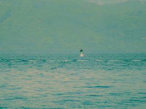 Χόρευαν τα δελφίνια δίπλα στην ακτή του Μαραθιά - Μαγικές στιγμές (pics)