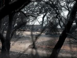 Μάτι: Το πόρισμα για την τραγωδία 'καίει' τον κρατικό μηχανισμό